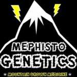 Acheter graines Mephisto