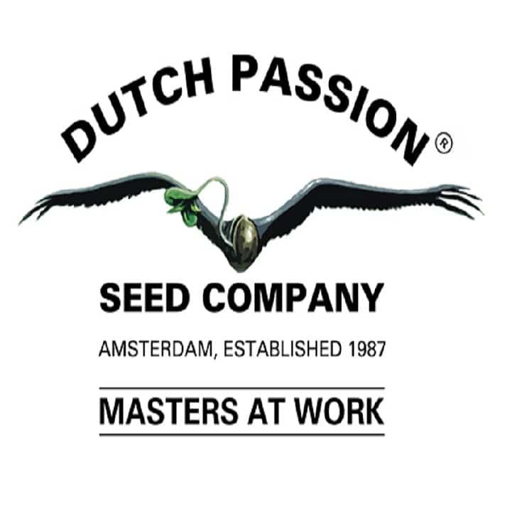 graines dutch passion