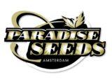 CBDivine Féminisée Paradise Seeds