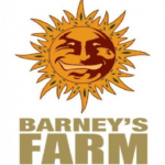 graines Barney's farm pas cheres