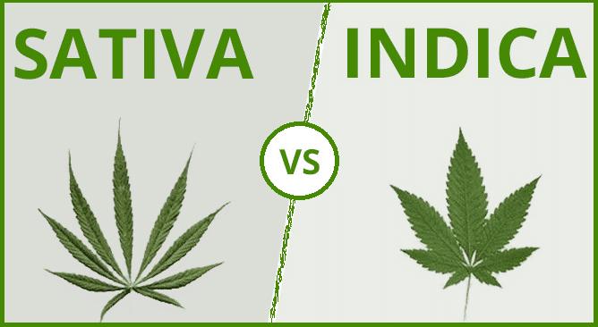 Indiva et Sativa : Les différences