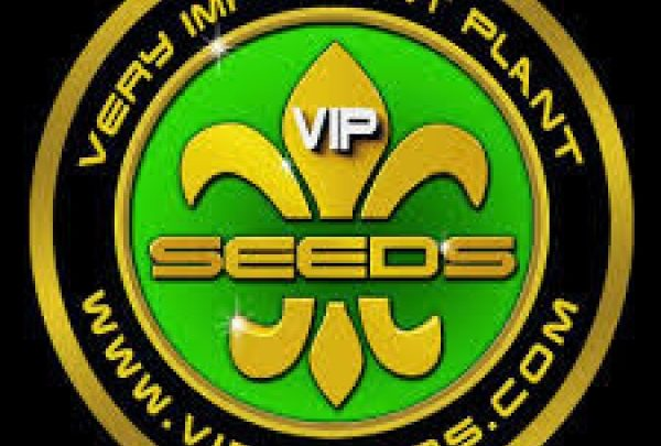 VIP Seeds retiré du catalogue
