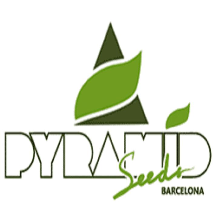 Graines Pyramid Seeds