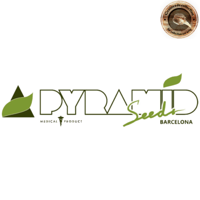 graines pyramid seeds