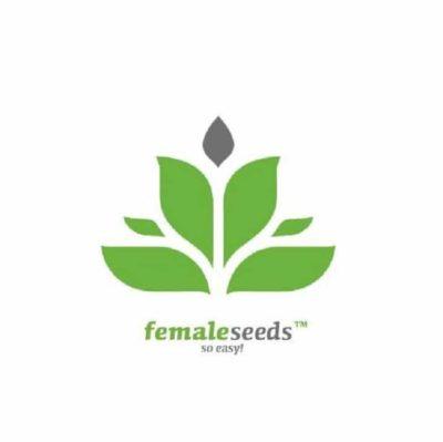 graines female Seeds