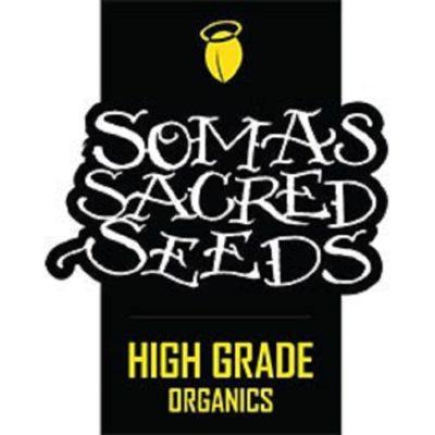 Graines Soma Seeds