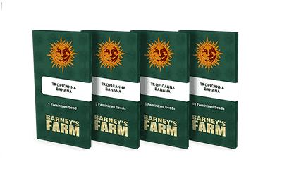 Nouvelles variétés Barney's Farm