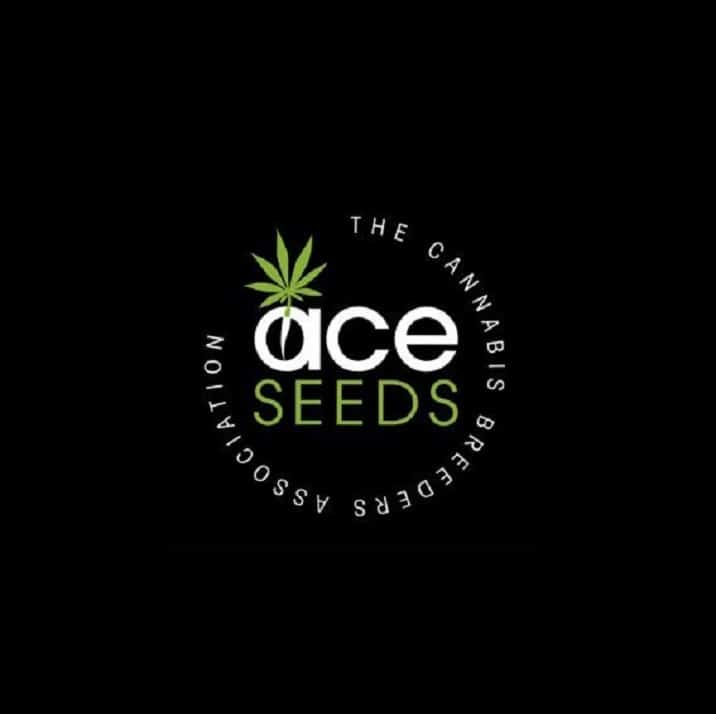 graines ACE Seeds