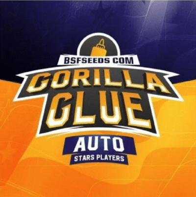 gorilla glue auto bsf
