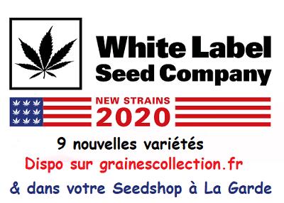 nouvelles variétés graines 2020