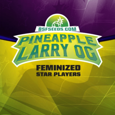 pineapple larry og bsf seeds