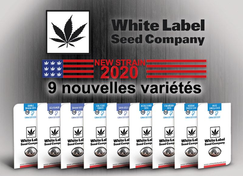 nouvelles graines white label