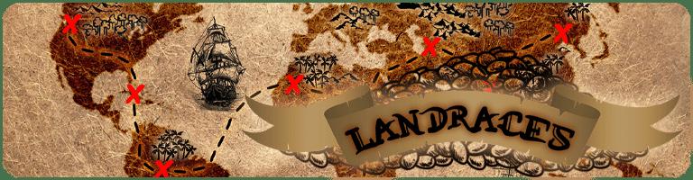 graines Landraces