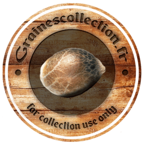 graines cannabis collection France