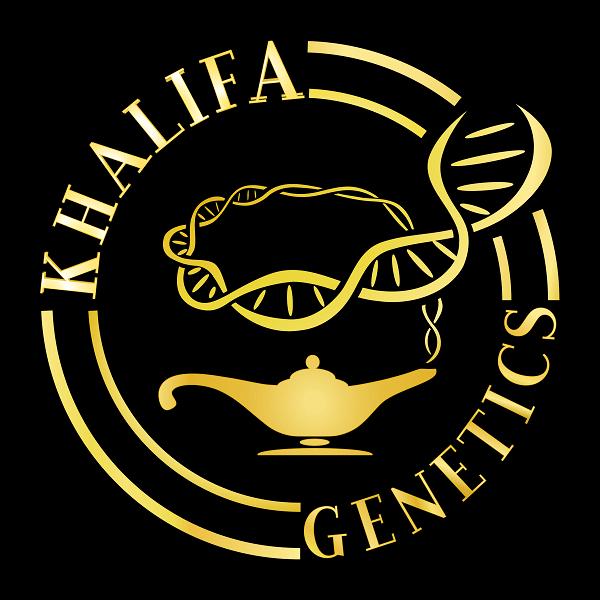 graines cannabis khalifa genetics