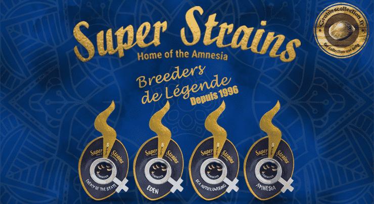 super strains graines cannabis collection amsterdam
