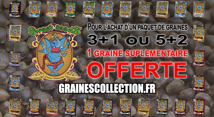 offre graines sweet seeds