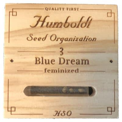 Graines blue dream humboldt