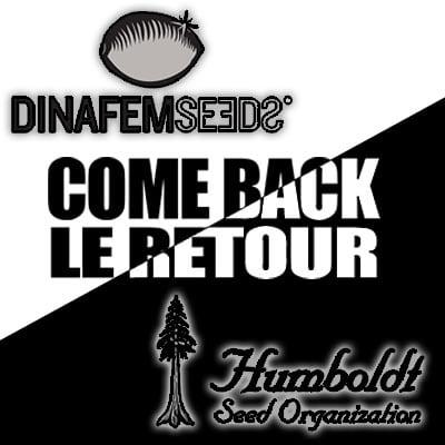 Dinafem et Humboldt a nouveau disponible