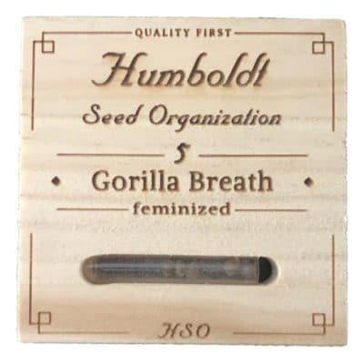 graines gorilla breath humboldt