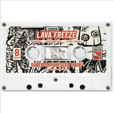 Lava Freeze féminisée Super Sativa Seed Club