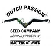 graines dutch passion