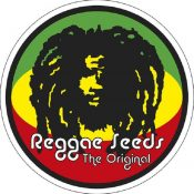 graines reggae seeds