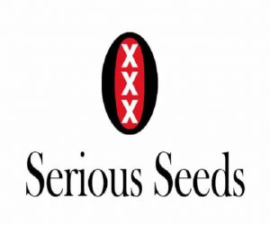 graines serious seeds